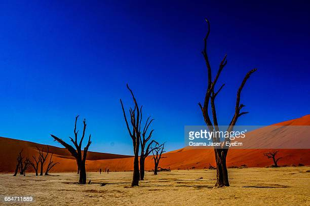 Bare Trees At Dead Vlei In Naukluft National Park Against Clear Blue Sky