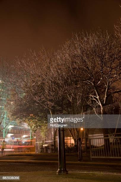 bare trees at night near lit structure - bollard stock photos and pictures