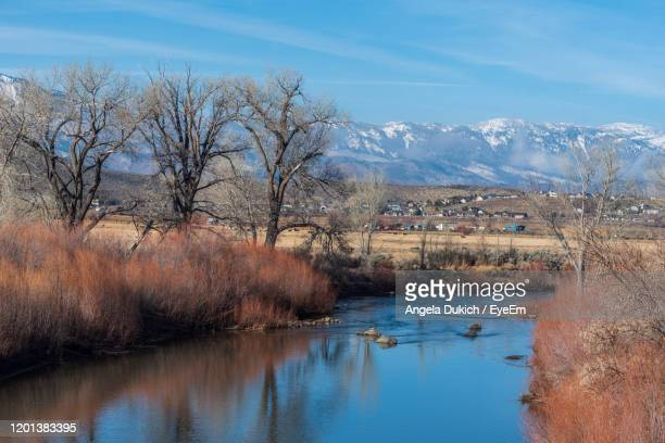 bare trees by lake against sky - carson california stock pictures, royalty-free photos & images