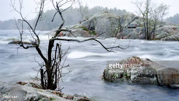 bare trees by river against sky during winter - peterborough ontario stock photos and pictures