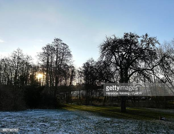 Bare Trees By River Against Sky During Winter