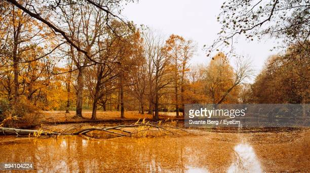 Bare Trees By River In Forest Against Sky