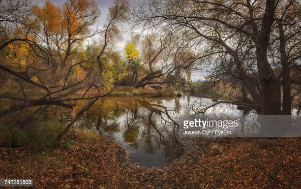 Bare Trees By River In Forest During Autumn