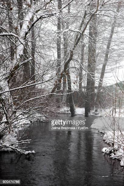 Bare Trees By River In Forest During Winter