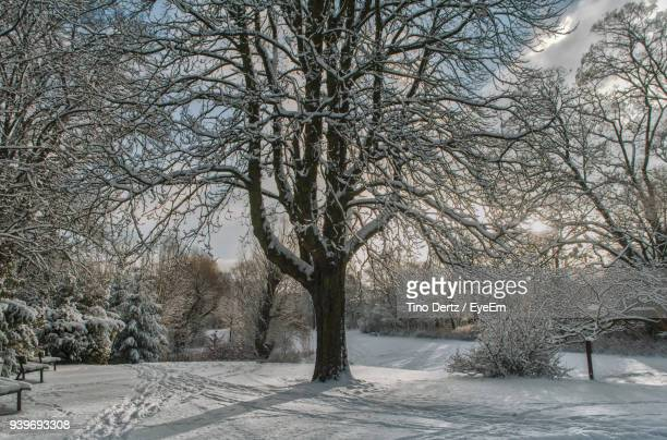 Bare Trees During Winter