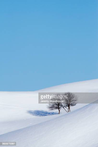 Bare trees growing on snowy hills under blue sky