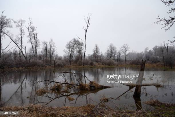 Bare trees in a pond at Battle Creek, Michigan, USA