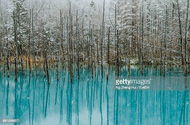 Bare Trees In Blue Pond With Reflection During Snowfall
