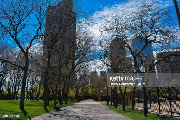 Bare Trees In City Against Sky