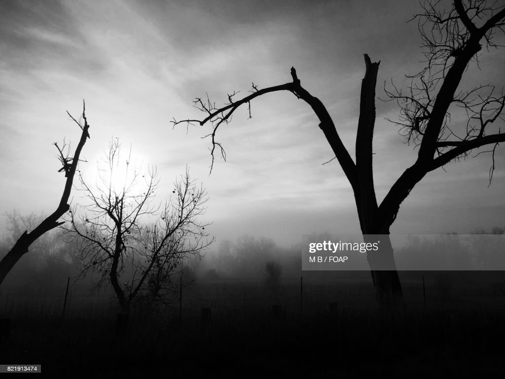Bare trees in Erie, Pennsylvania : Stock Photo