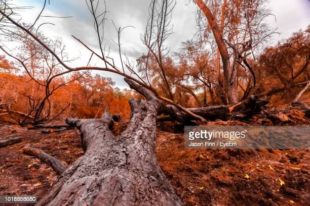 Bare Trees In Forest Against Sky During Autumn