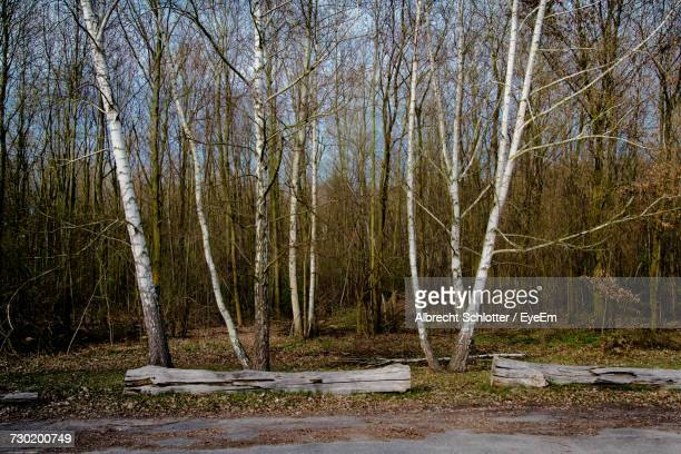bare trees in forest against sky - albrecht schlotter foto e immagini stock