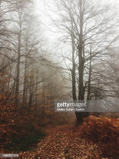 bare trees in forest during foggy weather - melike stock pictures, royalty-free photos & images