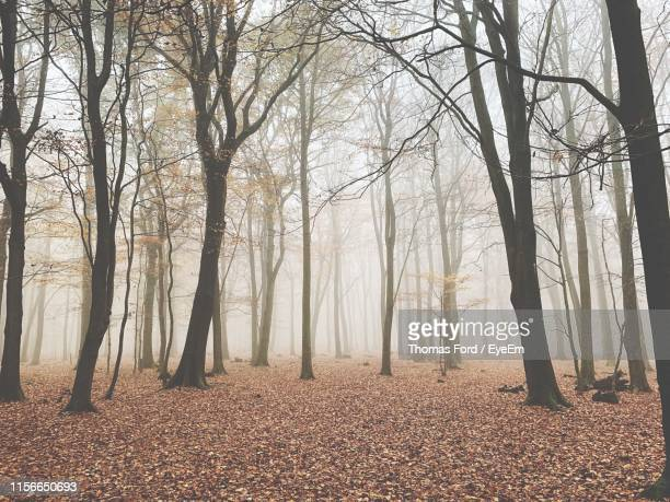 bare trees in forest during winter - bare tree stock pictures, royalty-free photos & images