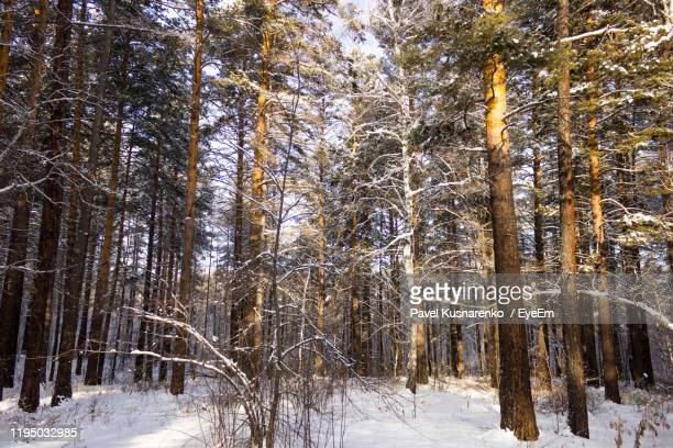 bare trees in forest during winter - snowflake vector stock photos and pictures