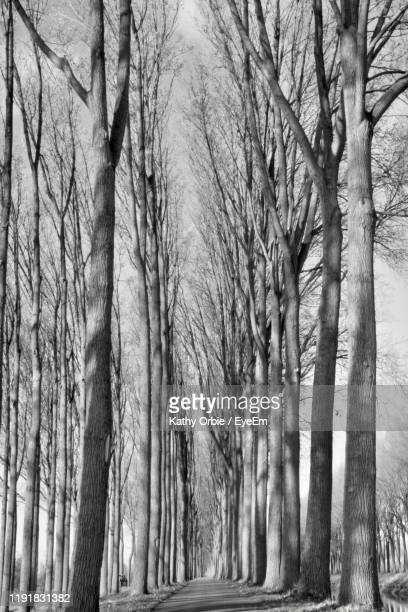 bare trees in forest - damme stock pictures, royalty-free photos & images