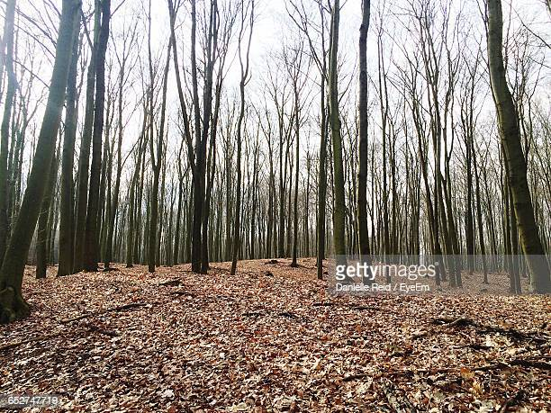 bare trees in forest - danielle reid stock pictures, royalty-free photos & images