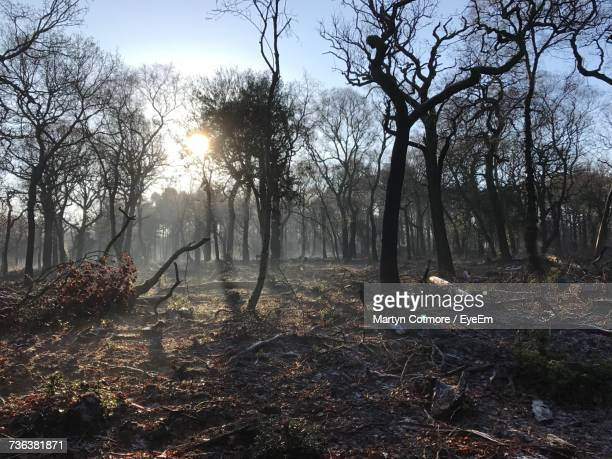 bare trees in forest - sutton coldfield stock photos and pictures