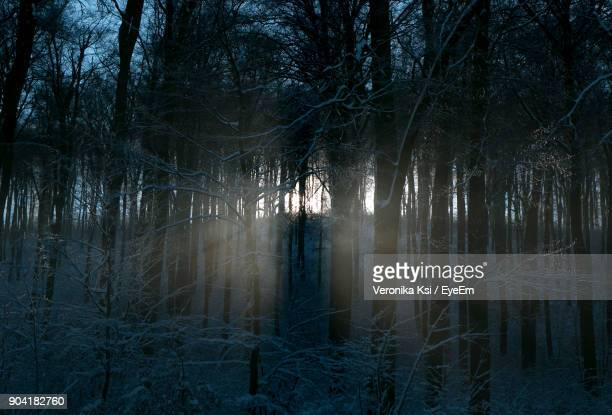 bare trees in forest - ksi stock photos and pictures