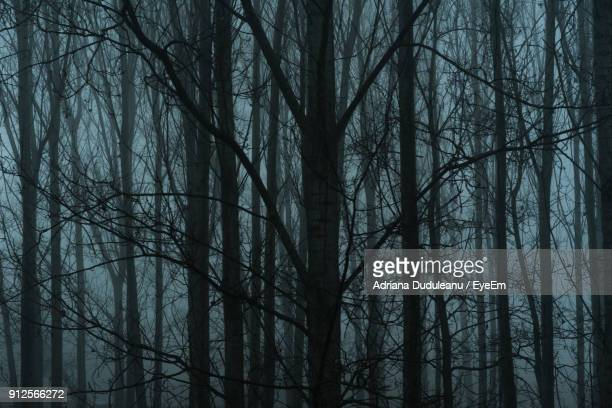 bare trees in forest - adriana duduleanu stock photos and pictures
