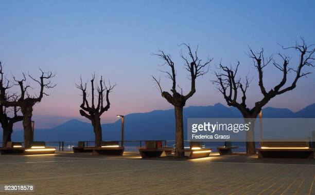 Bare Trees In Luino, Lombardy, Lake Maggiore, Northern Italy