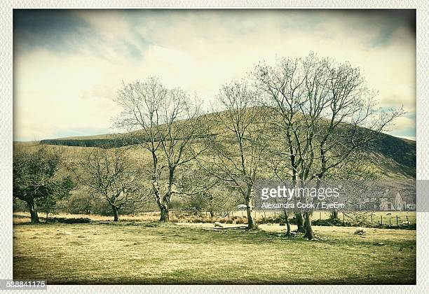 Bare Trees In Meadow