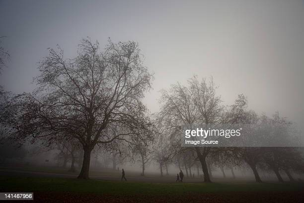 Bare trees in misty park