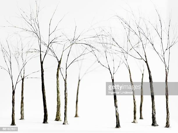 Bare trees in winter Sweden.
