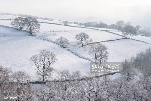 bare trees on a snowy hillside in northern england - 一月 ストックフォトと画像