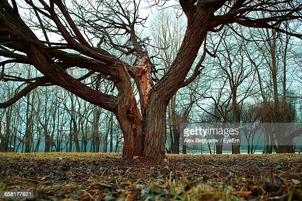 bare trees on field against bare trees - bare tree stock pictures, royalty-free photos & images