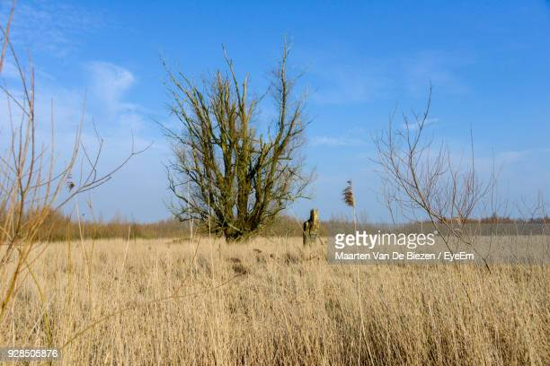 Bare Trees On Field Against Blue Sky