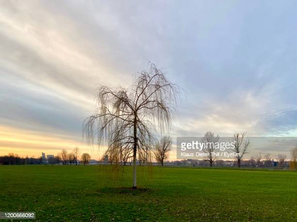 bare trees on field against sky during sunset - klaus-dieter thill stock-fotos und bilder