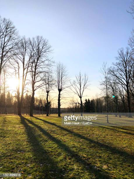 bare trees on field against sky during sunset - vanda stock pictures, royalty-free photos & images