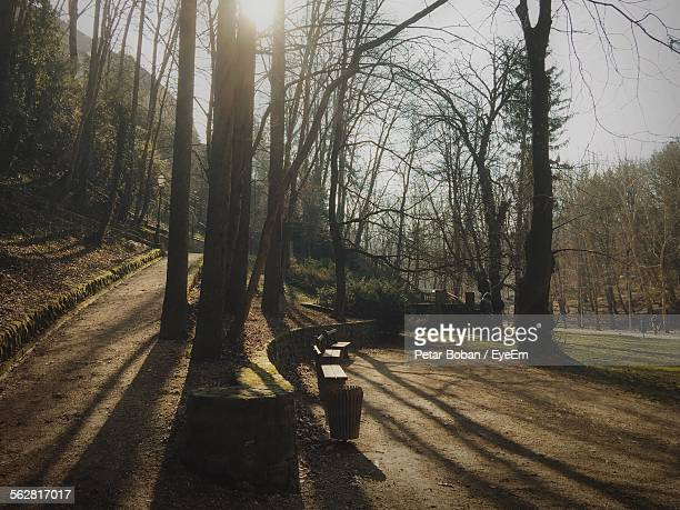 bare trees on field in park - boban stock pictures, royalty-free photos & images