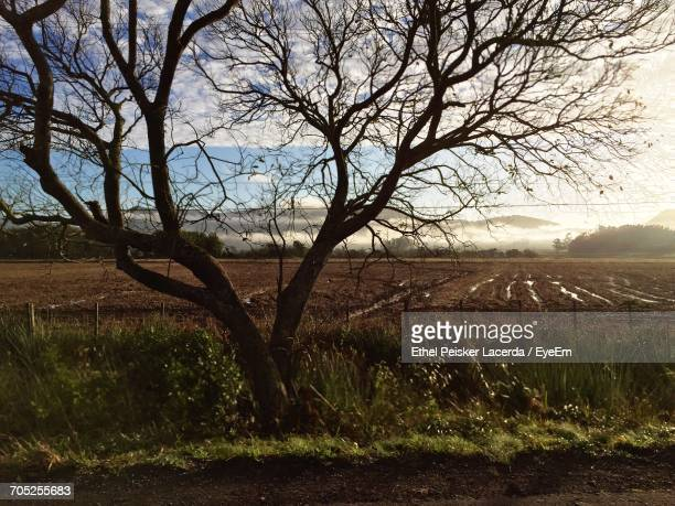 Bare Trees On Field