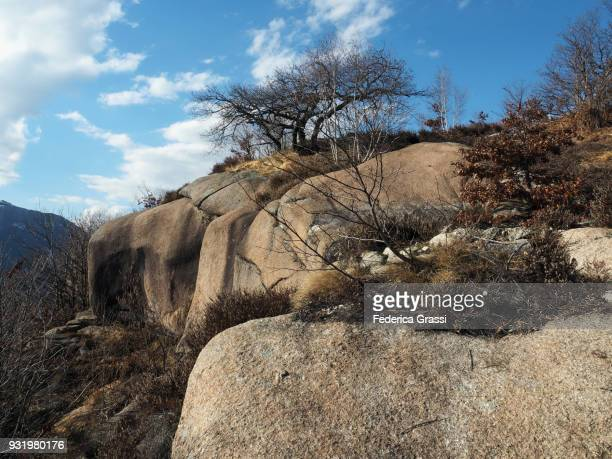 Bare Trees on Granite Rock Formations
