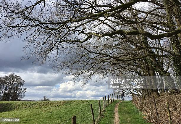 bare trees on grassy field against sky - paulien tabak stock pictures, royalty-free photos & images