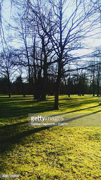 bare trees on grassy field - sabine hauswirth stock pictures, royalty-free photos & images