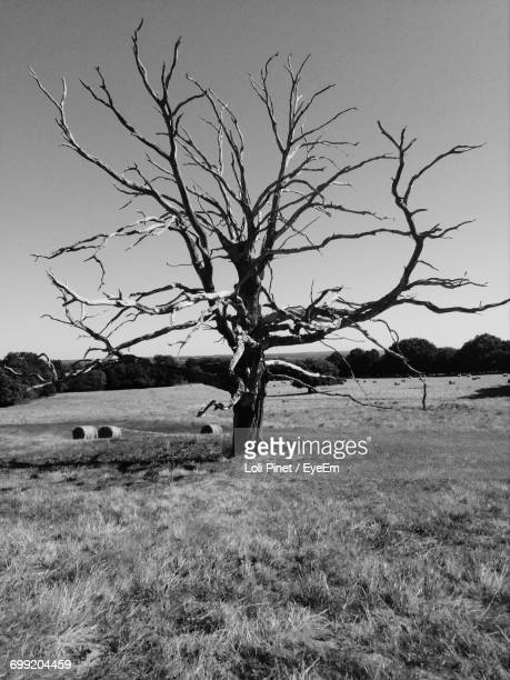 bare trees on landscape against clear sky - loli stock photos and pictures