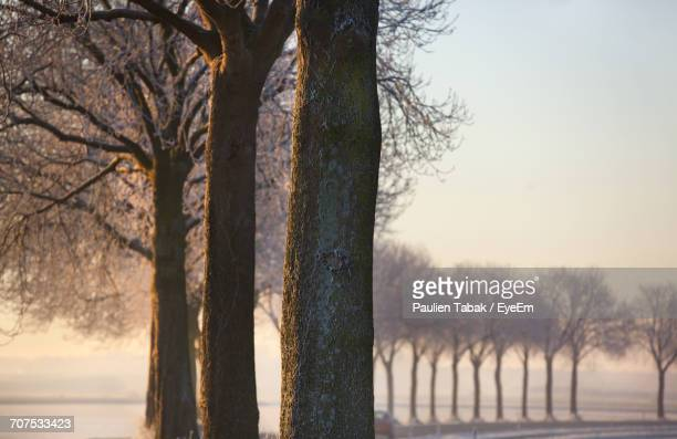 bare trees on landscape against sky - paulien tabak stock pictures, royalty-free photos & images
