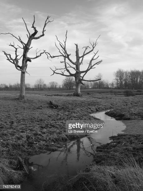 bare trees on landscape against sky - liz brewer stock photos and pictures