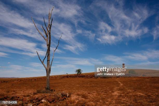 Bare Trees On Landscape Against Sky