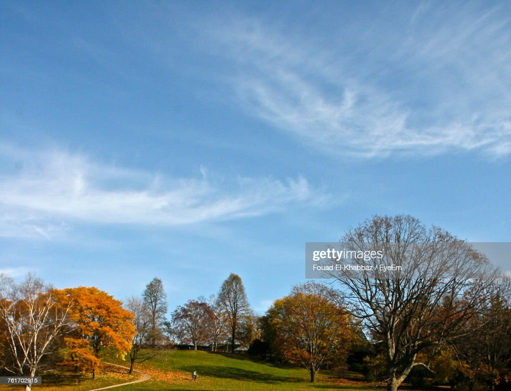 Bare Trees On Landscape Against Sky : Stock Photo