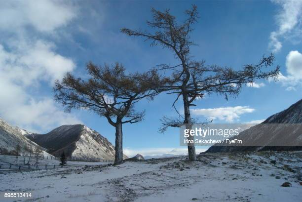 Bare Trees On Mountain Against Sky