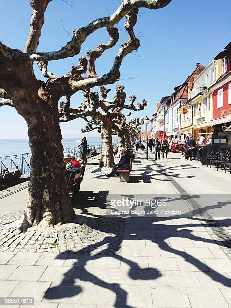 bare trees on promenade against sky - baum stock pictures, royalty-free photos & images