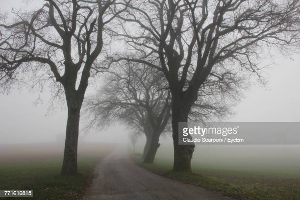 Bare Trees On Road In Foggy Weather