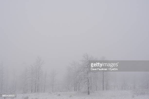 Bare Trees On Snow Covered Field Against Clear Sky During Foggy Weather