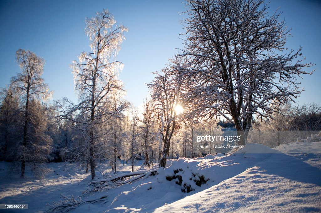 Bare Trees On Snow Covered Field Against Sky : Stockfoto
