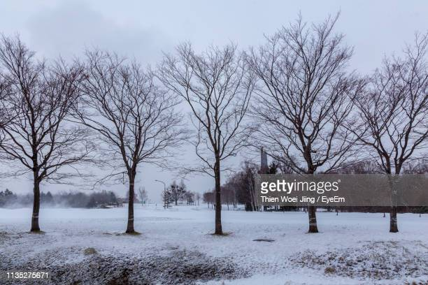 bare trees on snow covered field against sky - bare tree stock pictures, royalty-free photos & images