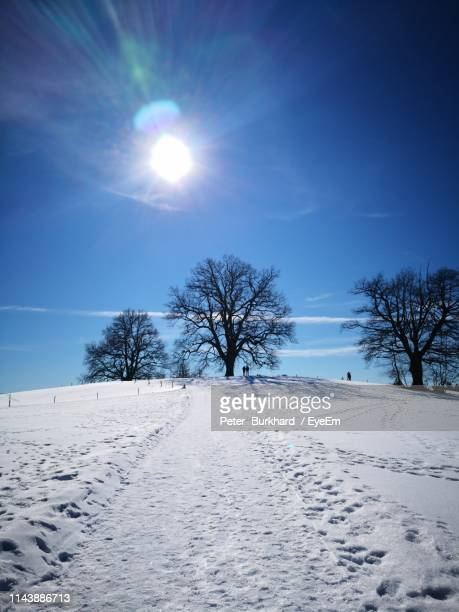 bare trees on snow covered field against sky - peter snow stock pictures, royalty-free photos & images